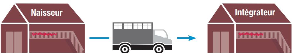 Schéma Transport Veau